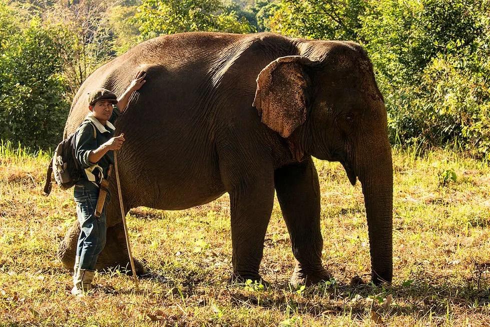 Ruby the elephant