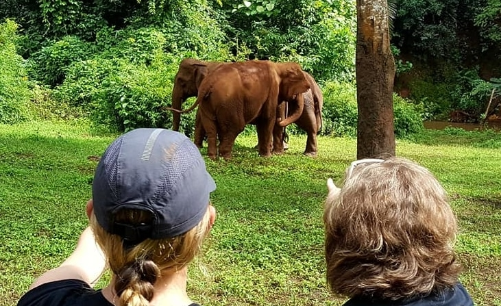Volunteers observing the elephants