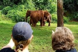 Volunteer Abroad with Elephants