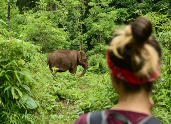Ethical Elephant Sanctuaries