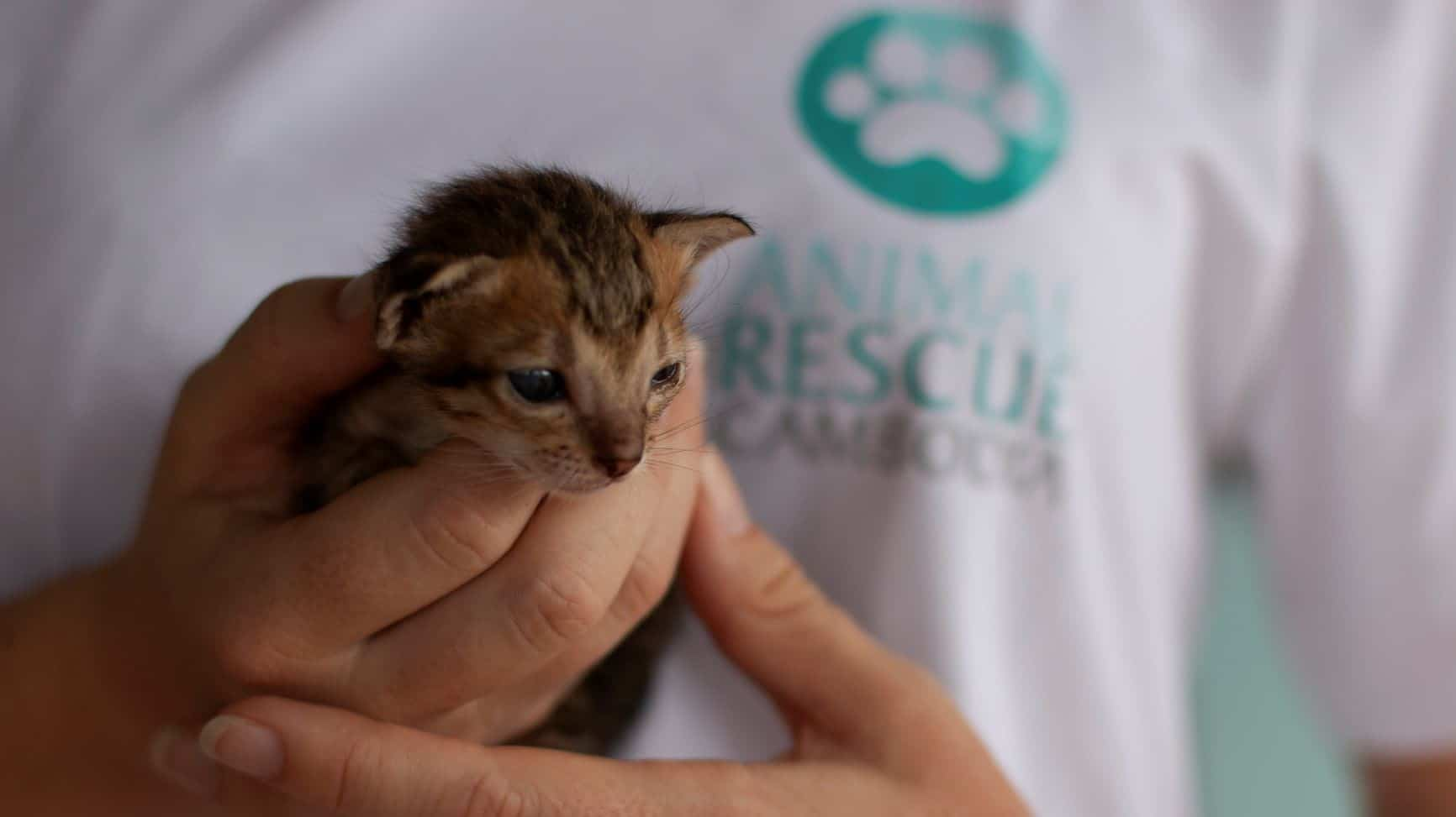 Volunteer Cambodia Cat and Dog Welfare Project