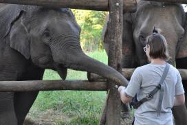 Volunteer with Elephants as a young volunteer