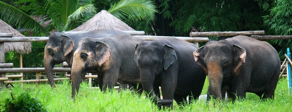 Volunteer Abroad with Elephants