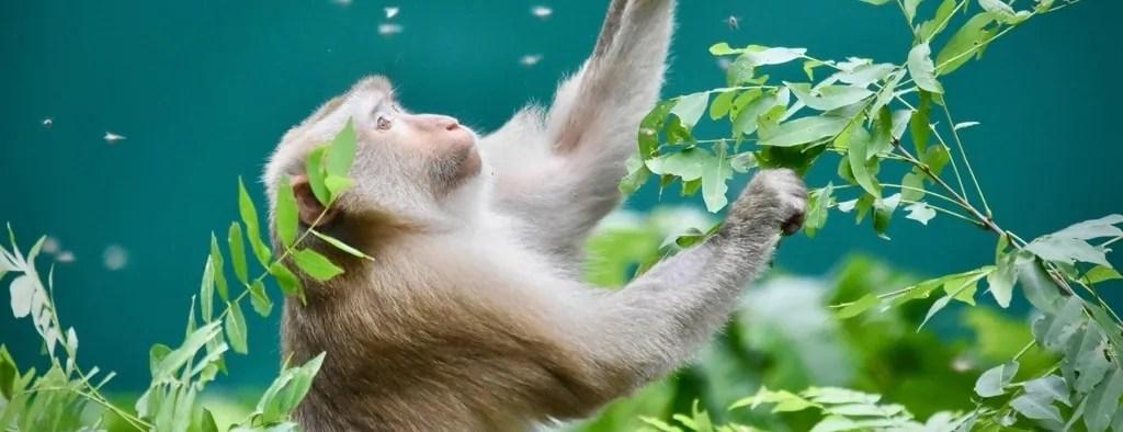 Volunteer with Animals Thailand