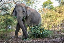Volunteer with elephants in an ethical way
