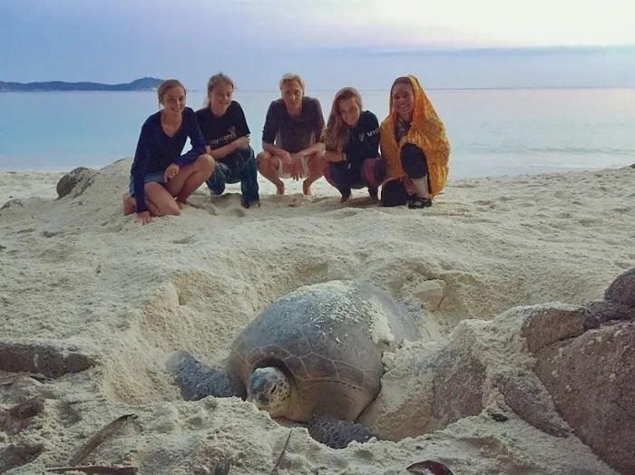 Volunteer to Help Protect Sea Turtles