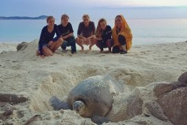 Volunteers witnessing a female sea turtle lay her nest Malaysia