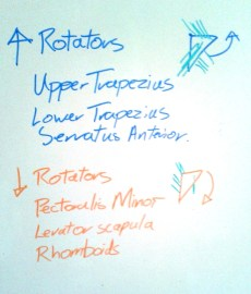 Upward and Downward rotators
