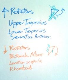 Upward and Downward rotators