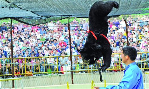 A black bear walks a tightrope at a wild animal zoo in Qingdao, Shandong Province, on October 3. Photo: CFP