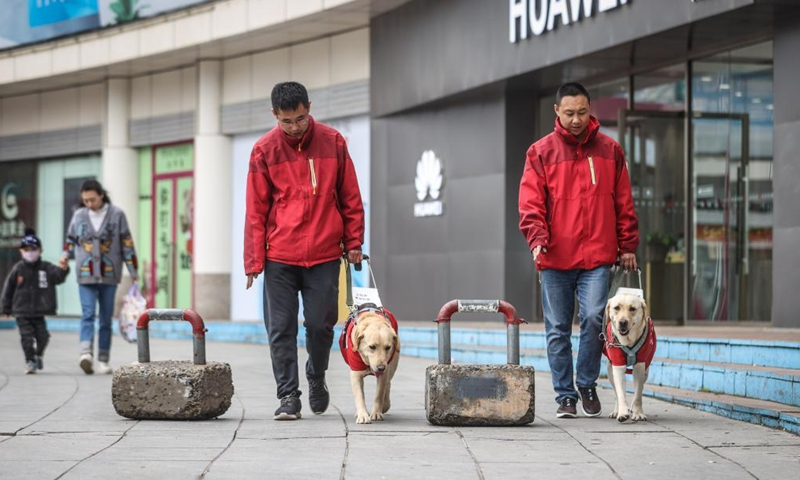 Trainers Fu Mingyan (R) and Jiang Boya train guide dogs on a street in Dalian, northeast China's Liaoning Province, April 23, 2021.Photo:Xinhua