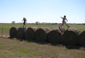 FACTORY ORDERS AND PRODUCTIVITY ARE UP Are you making hay?