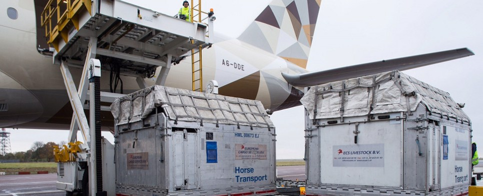 Etihad carried horse shipments of export cargo and import cargo in international trade.