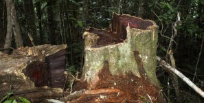 Block Peruvian timber shipments of export cargo and import cargo in international trade.