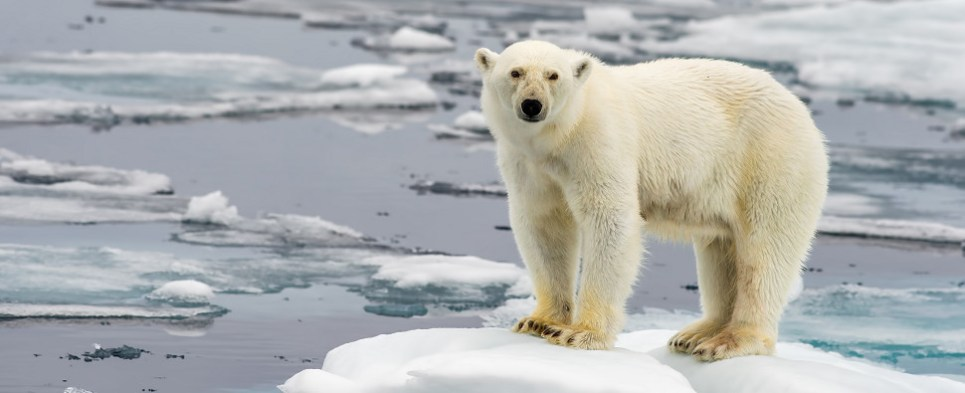 The Arctic has seen more shipments of export cargo and import cargo in international trade this year.