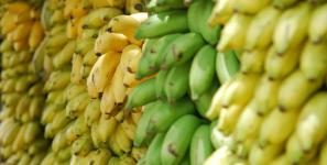 plantain imports