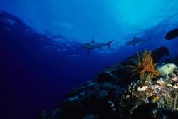 ocean acidification more urgent than previously thought