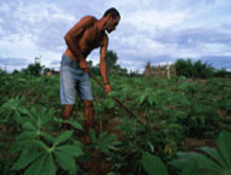 World Bank Grants $1.3 Billion Loan to Support Environment, Sustainable Resource Use in Brazil