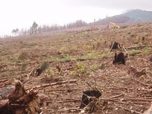 South Africa's Gasophere seeks to raise awareness and slow the practice of unsustainable high-impact, fast rotation forestry