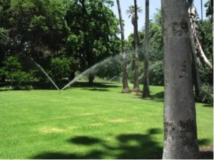 Sprinklers at the Los Angeles County Arboretum and Botanic Garden. Photo: Elizaveta Litvak