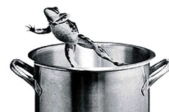 Slow Cooking Frogs