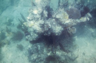 snorkelen in de golf van mexico