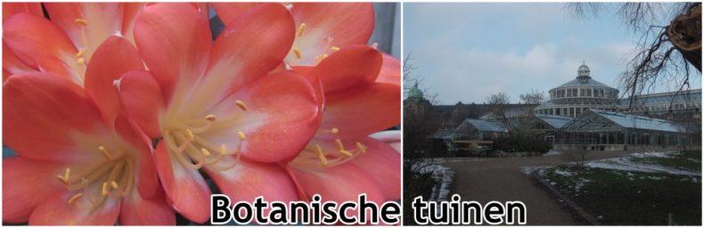 Botanische tuinen Kopenhagen