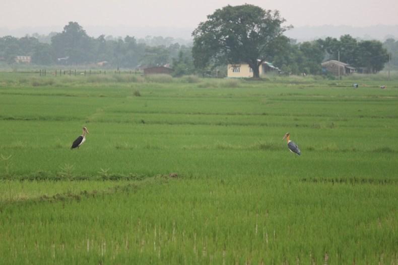 Jeepsafari in Chitwan