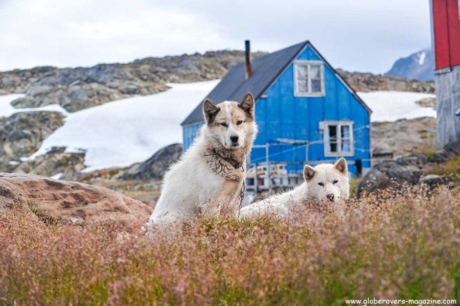Dog, Kulusuk, Greenland