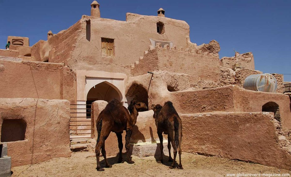 Camels in front of Ateshoni Guesthouse, Garmeh, Iran