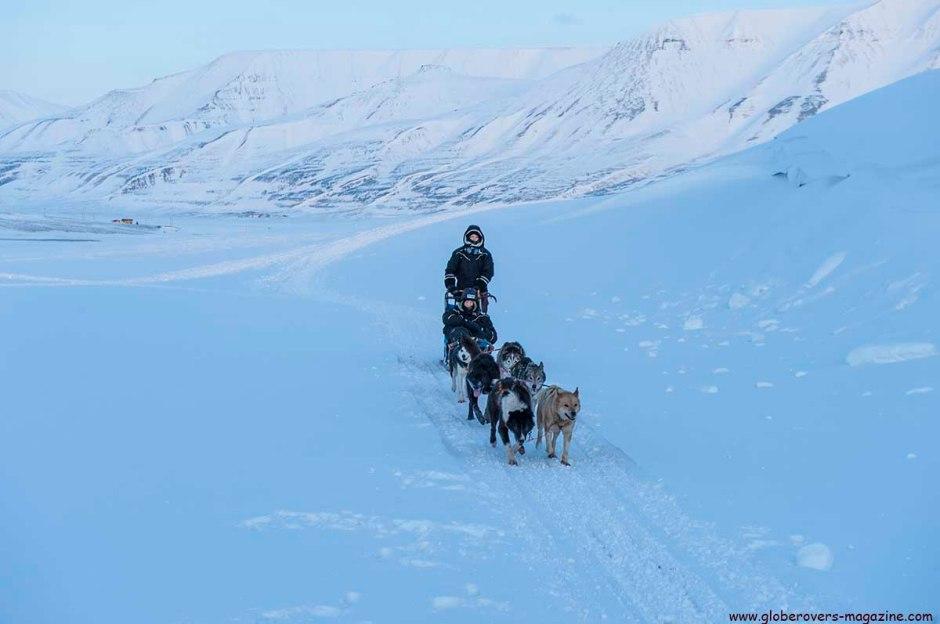 Dog Sledding - Svalbard, Norway