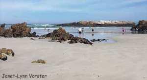 Hermanus-Kammabaai-Beach, South Africa