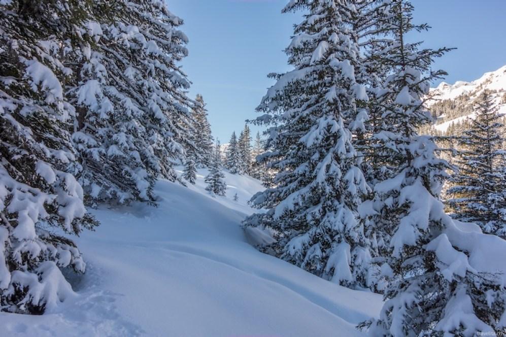 Muerren-verschneite Tannen_Travelita