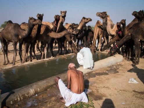 Pushkar Kamelmesse Indien-11