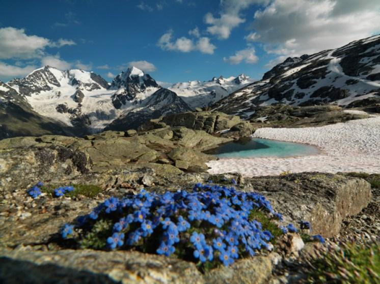 Himmelsherold mit Biancograt, Piz Bernina und Piz Roseg – Val Roseg, Fuorcla Surlej, Oberengadin