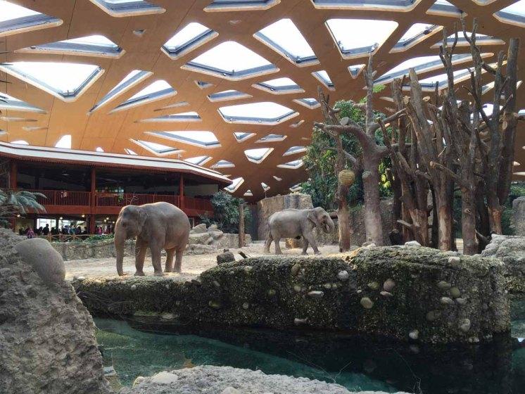 Unter dem coolen Dach im Elefantenhaus, vorne seht ihr das Schwimmbecken