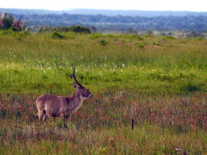 Südafrika Safari Nationalpark