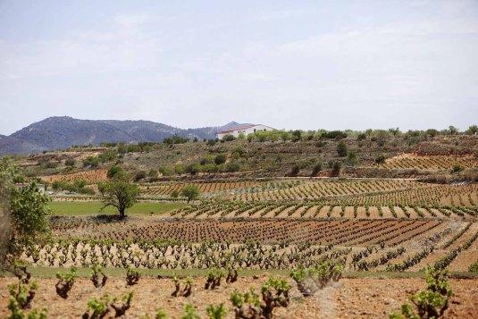 Weinstrasse - Biowinzer Heiner Sauer - Weingut Spanien Rebberg