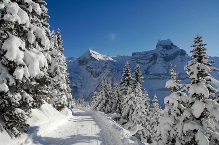 Strasse, Baum, Wald, Berg, Hahnen;.Street, Tree, Forest, Mountain, Hahnen;