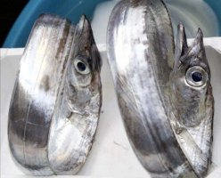 Catania-Sizilien-Fisch