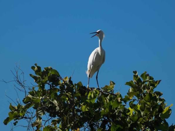 Fischreiher im Pantanal