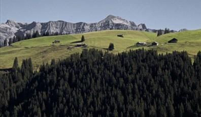 Die Alp Rona - im Hintergrund die Schesaplana