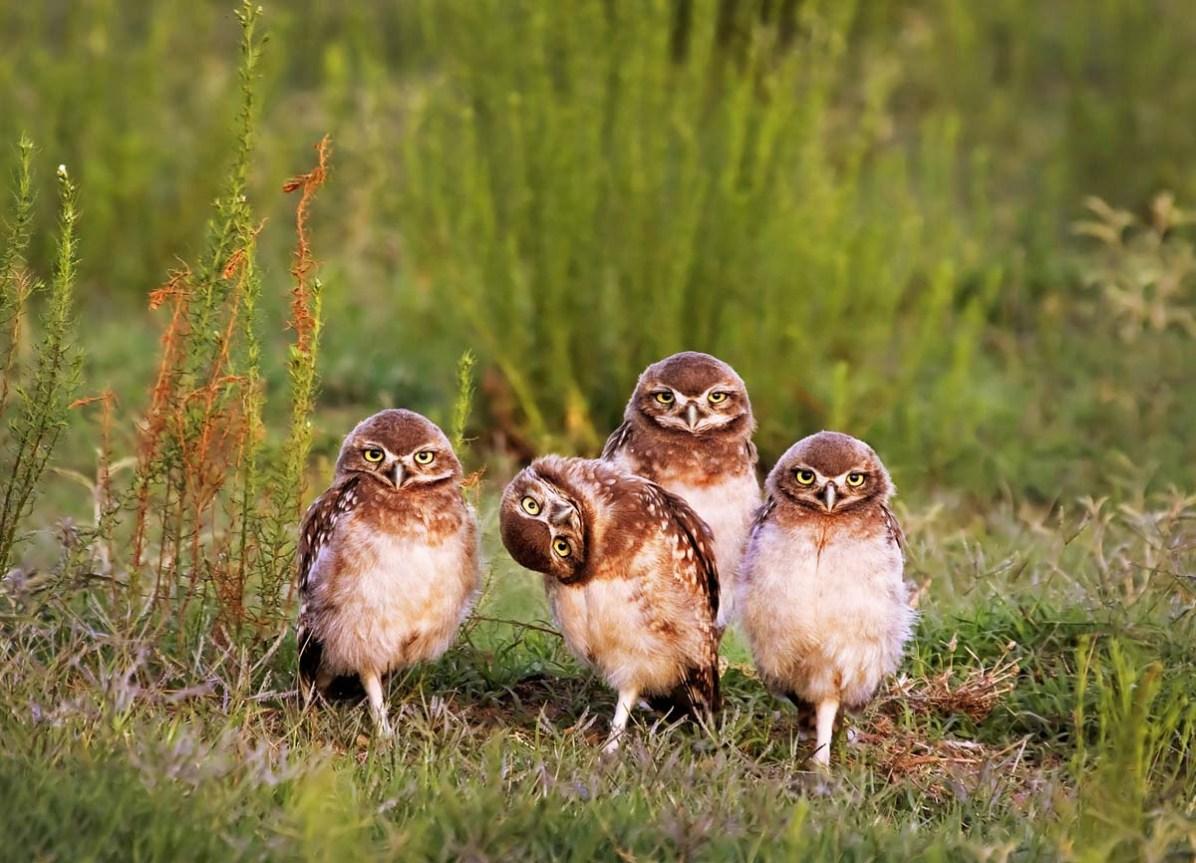 © Mario Fiorucci, comedy wildlife photo awards 2016