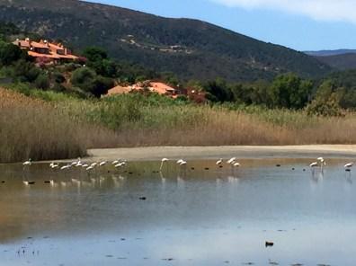 Globesession_Monte Cogoni_Flamingo