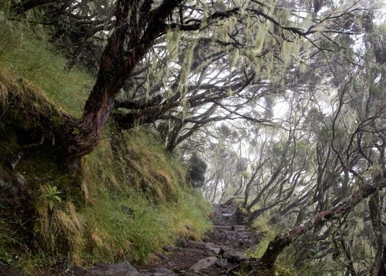 La Reunion Wandern Trekking Mehrtagestour 15