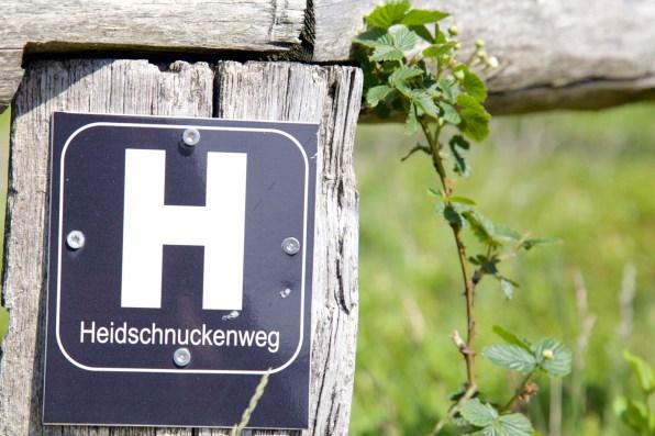 Lueneburger Heide Bluetenzeit 05