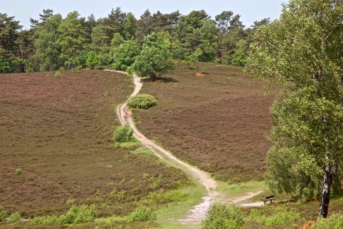 Lueneburger Heide Bluetenzeit 19