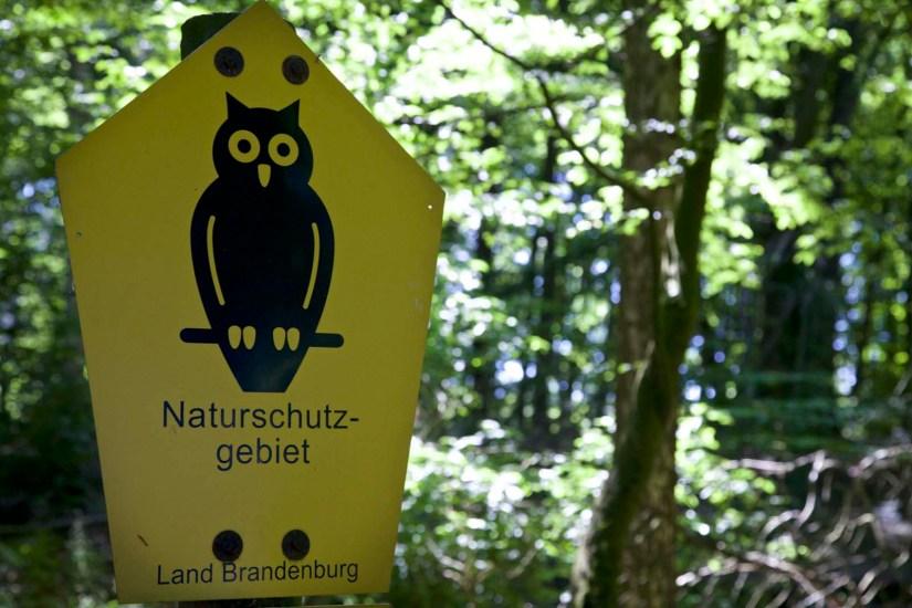 Uckermark Grumsiner Wald unesco weltnaturerbe 20
