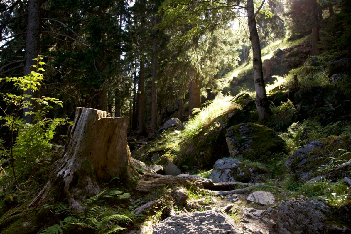 Fernwanderung Schweiz Via Bregaglia 26