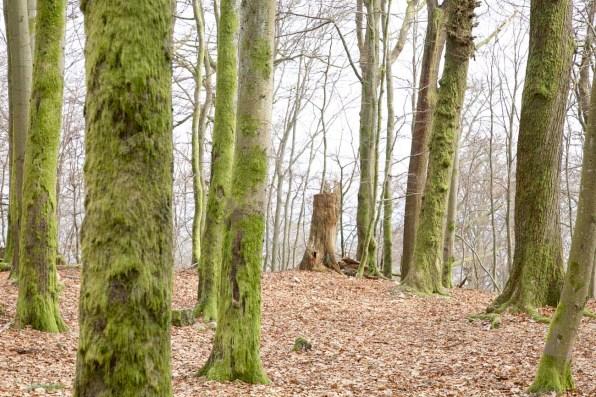 Saarland Wellnesshotel und Natur 12